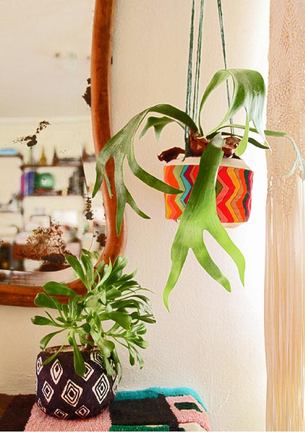 justina-blakeney-coconut-planters