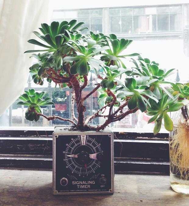 plants-in-e-waste