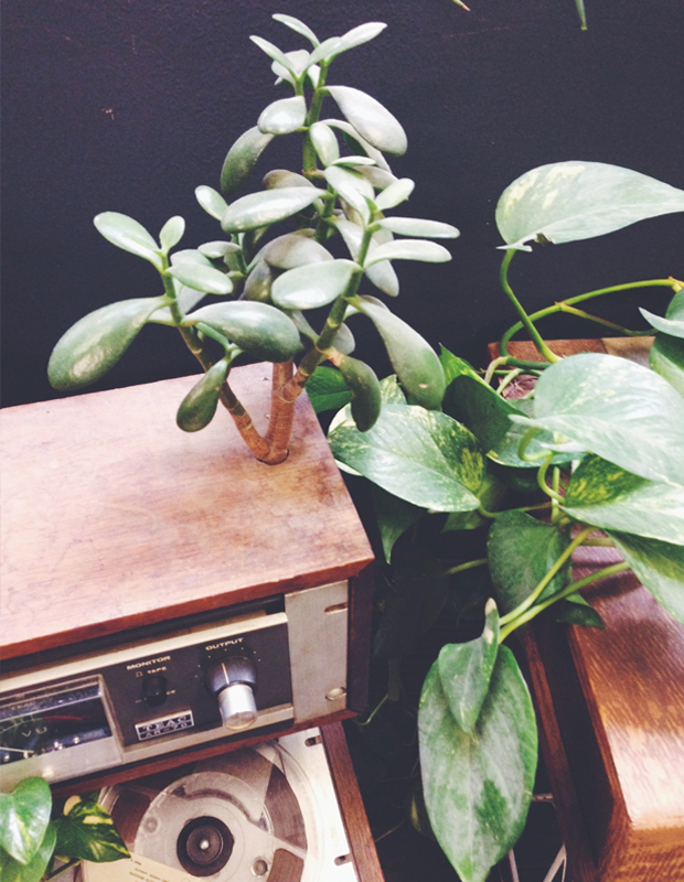 plants-in-e-waste2