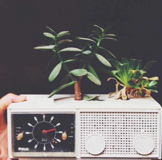 plants-in-e-waste4
