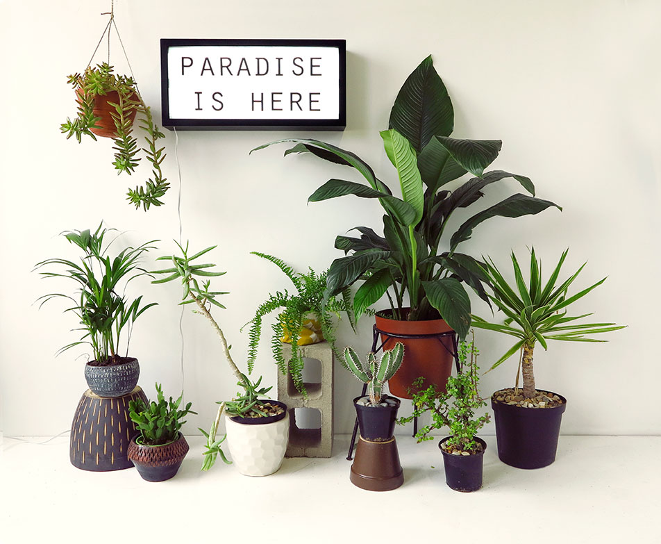 MOODBOARD-Paradise-is-Here-2