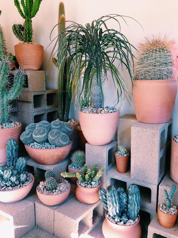 cactus-3-