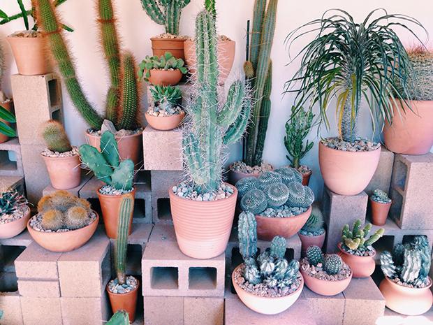 cactus-4-