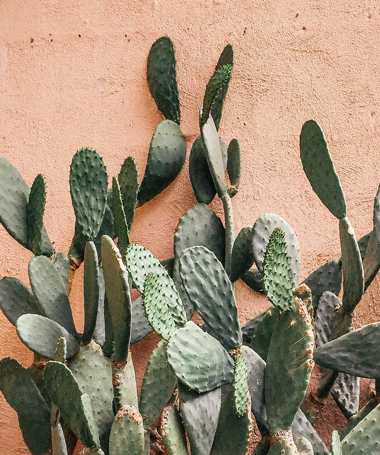 Cactus By JustinaBlakeney