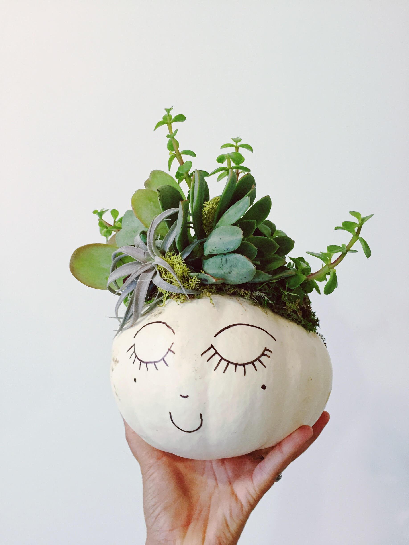 Succulent Pumpkin | The Jungalow