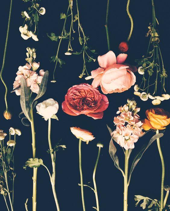 Flowers by Justina Blakeney