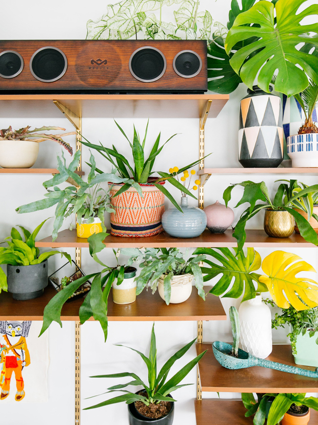 DIY wall unit and plants