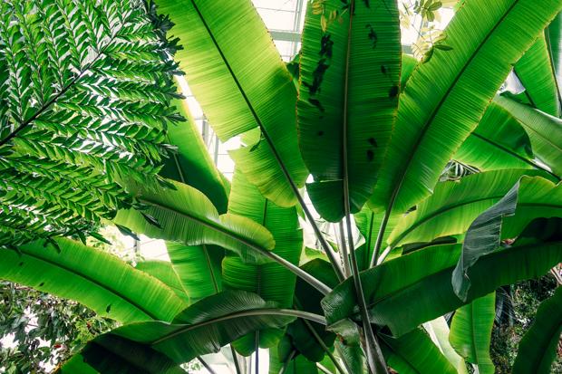 Jardin-des-plantes-11