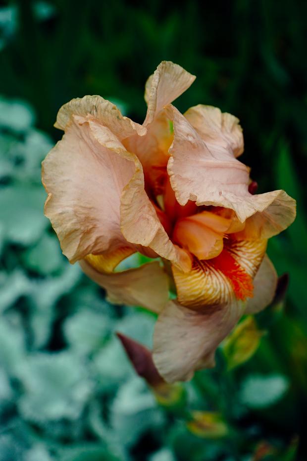 Jardin-des-plantes-14