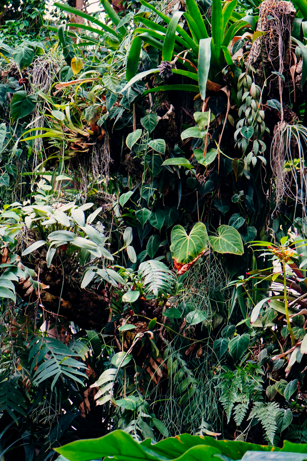 Jardin-des-plantes-3