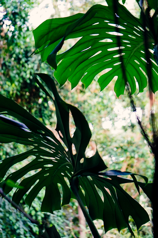 Jardin-des-plantes-5