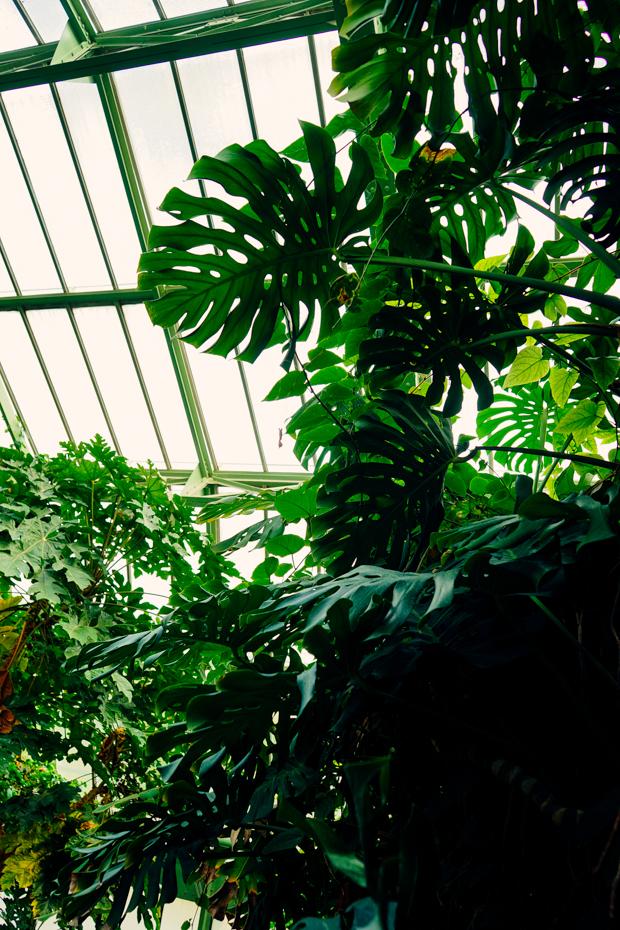 Jardin-des-plantes-7