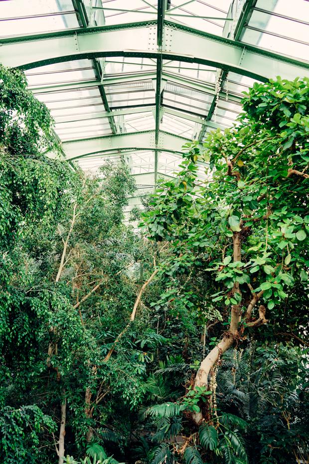 Jardin-des-plantes-8