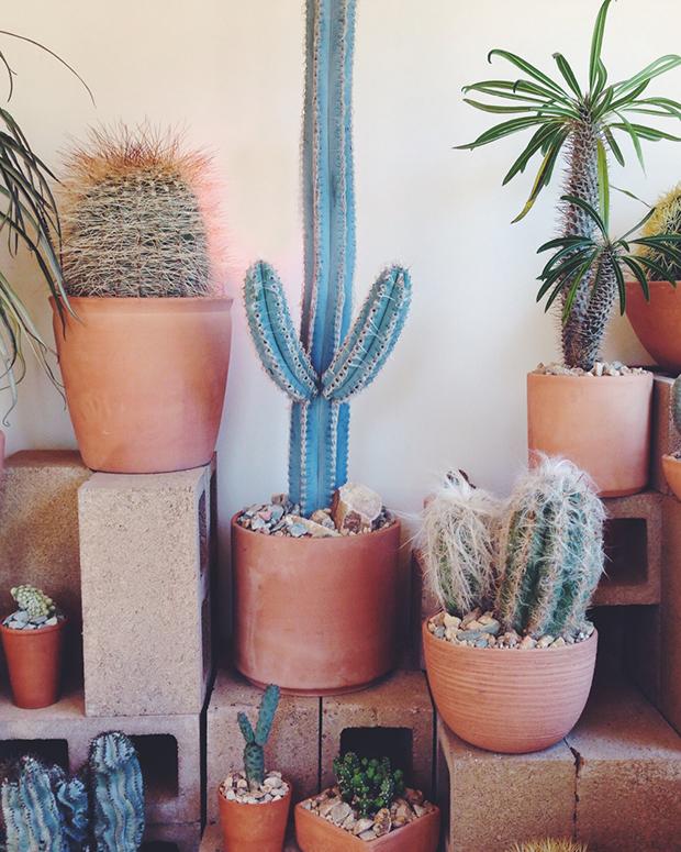 terra-cotta-planter-cactus