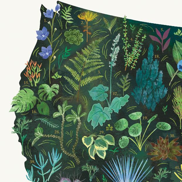 MID-Goods-Botanical-Map-Closeup