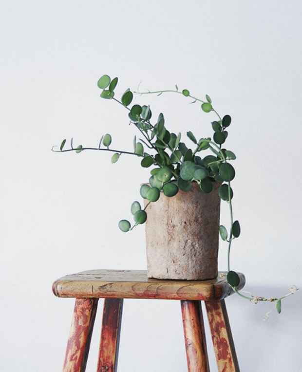 xerosicyos-danguyi-stool-apartmentf15