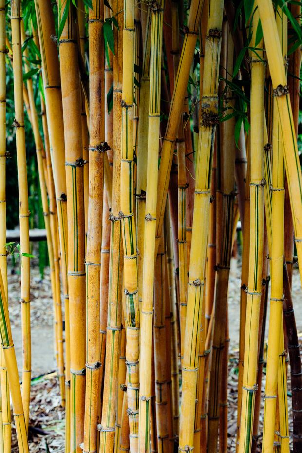 botanical-garden-justina-blakeney-1-2