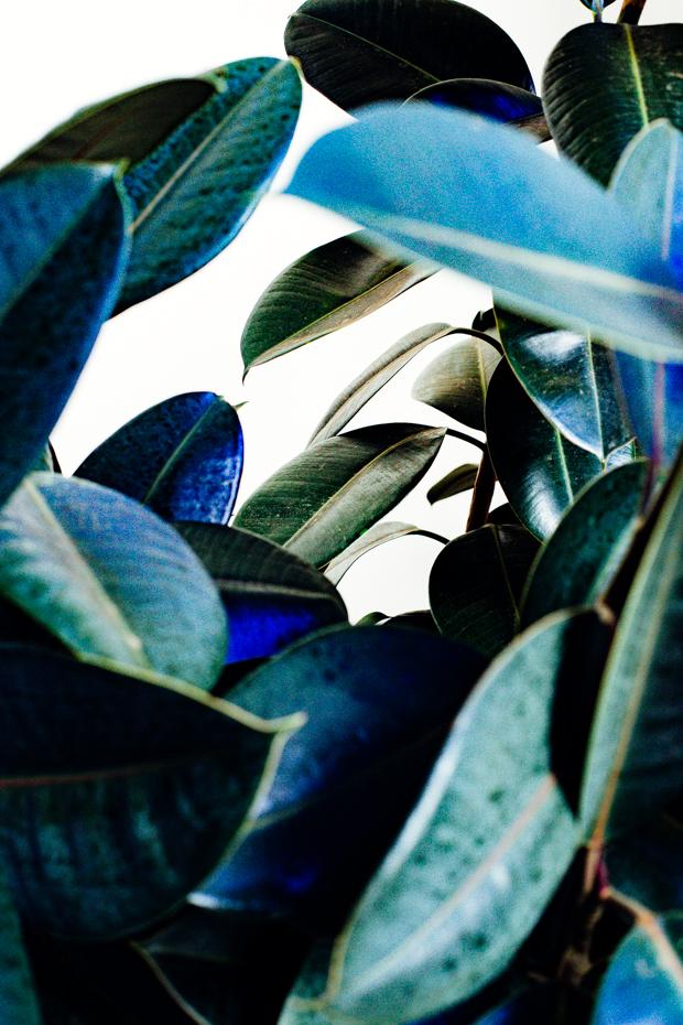 botanical-garden-justina-blakeney-1-4