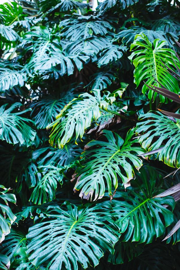 botanical-garden-justina-blakeney-1
