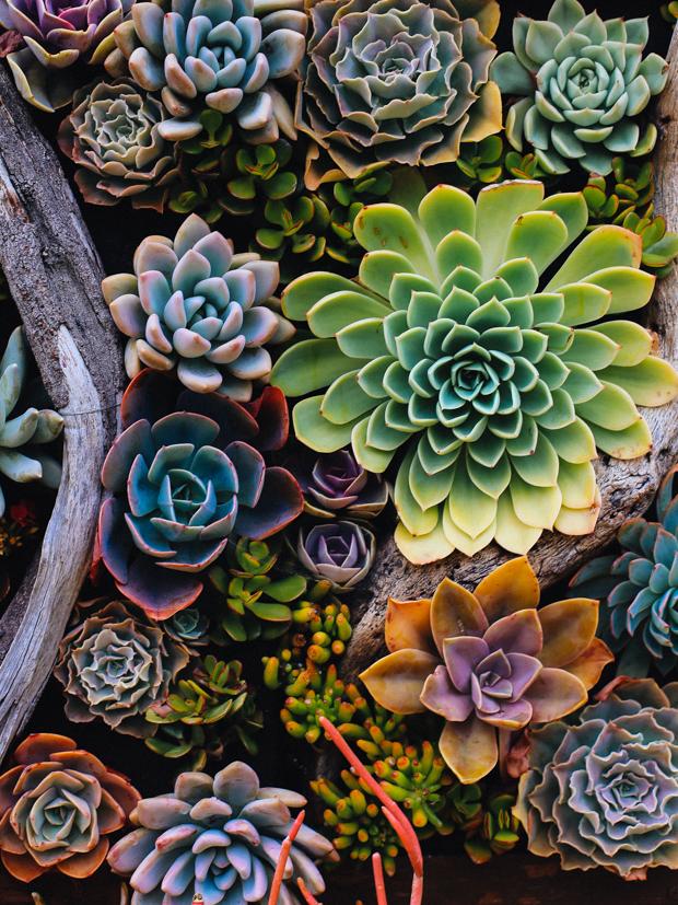 botanical-garden-justina-blakeney-2