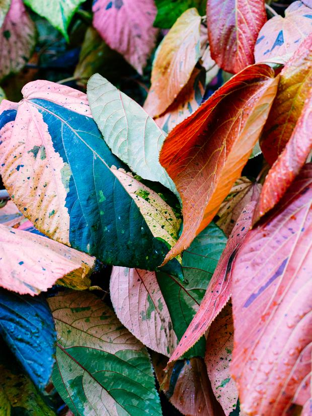 botanical-garden-justina-blakeney-3-3