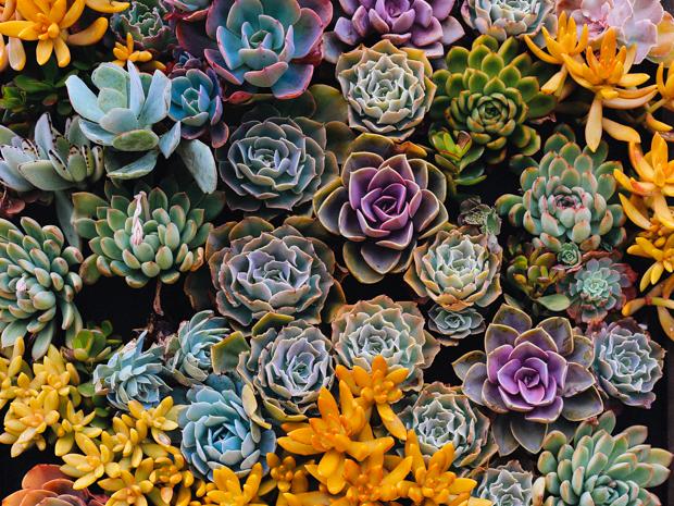 botanical-garden-justina-blakeney-3