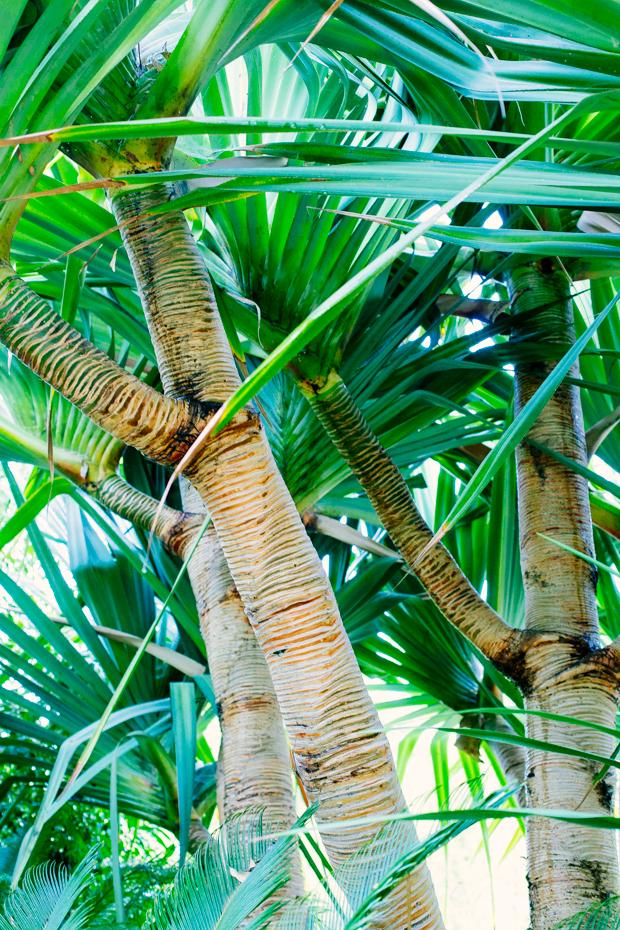 botanical-garden-justina-blakeney-4-3