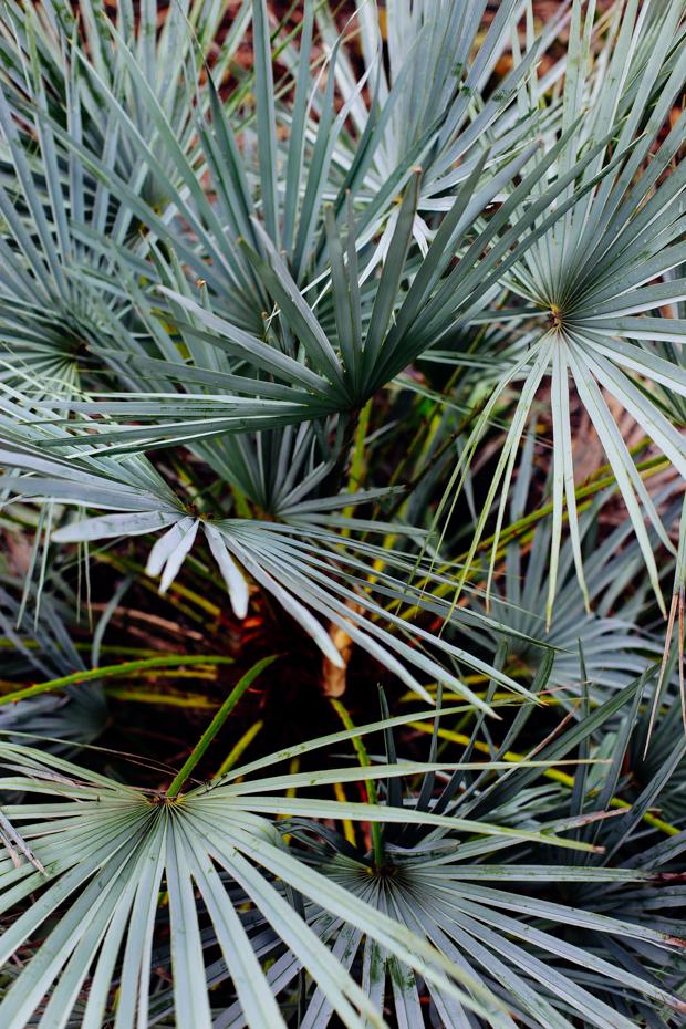 botanical-garden-justina-blakeney-5