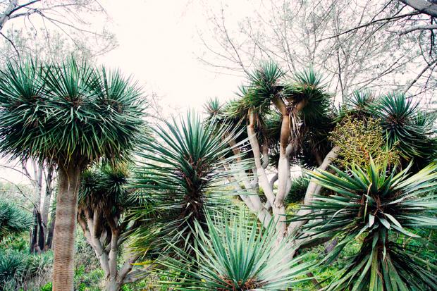 botanical-garden-justina-blakeney-6