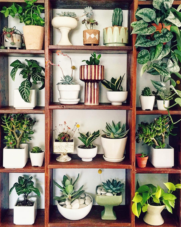 wild-wonderful-plant-shelf