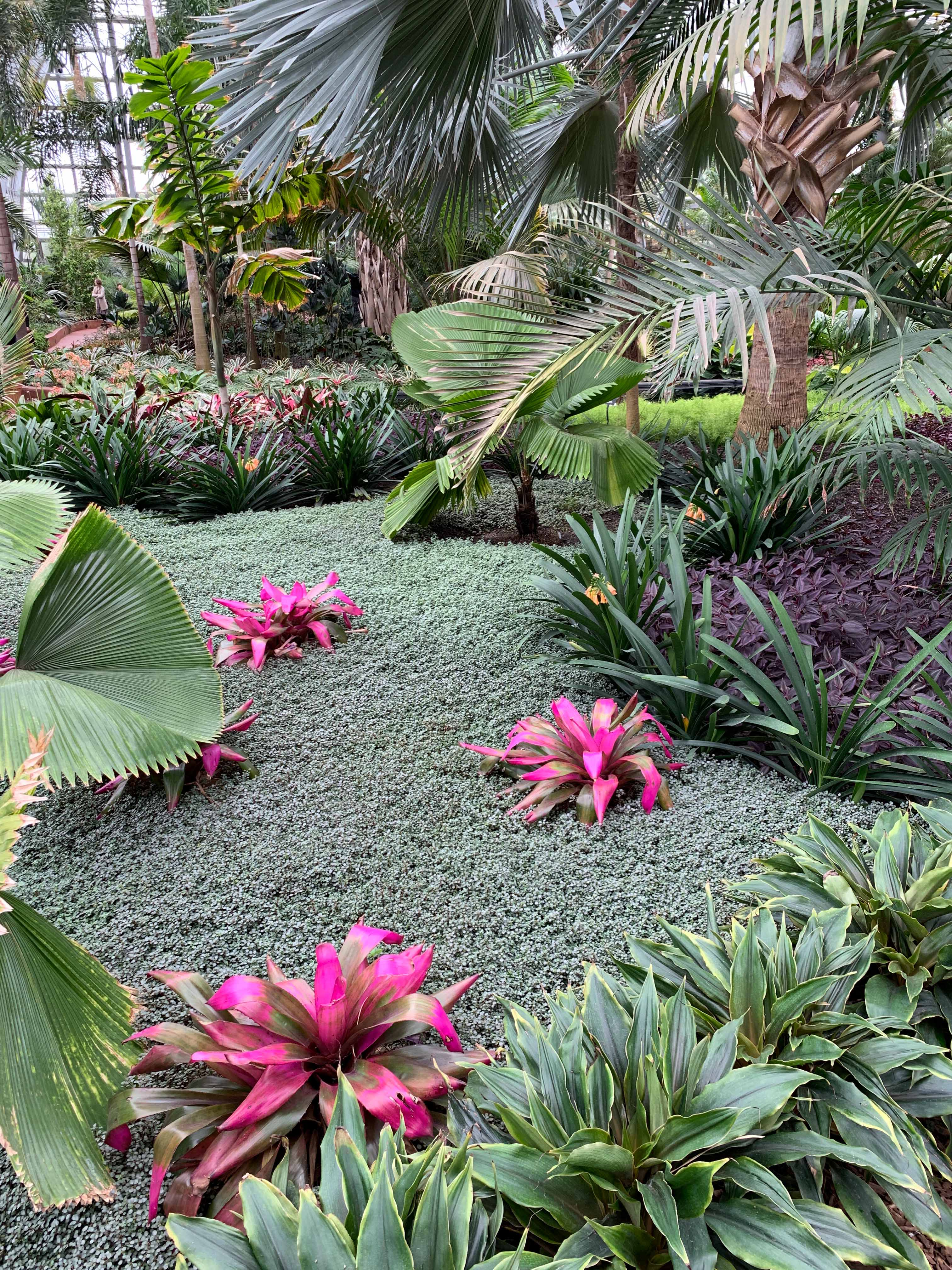 Color And Pattern Inspiration From The Garfield Conservatory Justina Blakeney